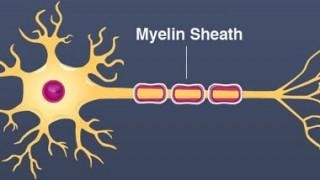 myelinsheath