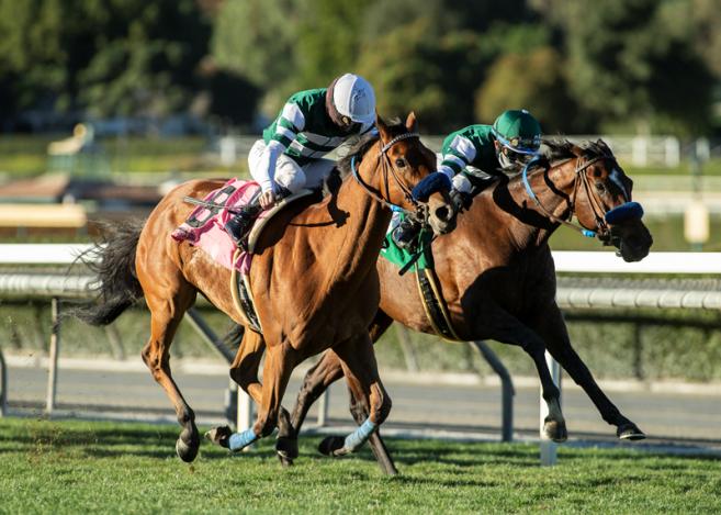 California horse racing purses